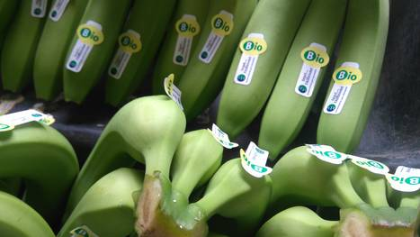 organic certification of bananas world banana forum food and rh fao org