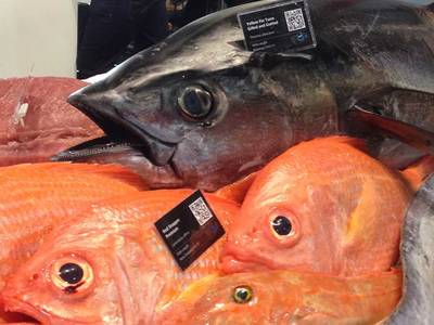 Do you know where the fish on your plate comes from? | Blue