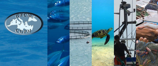 General Fisheries Commission for the Mediterranean (GFCM