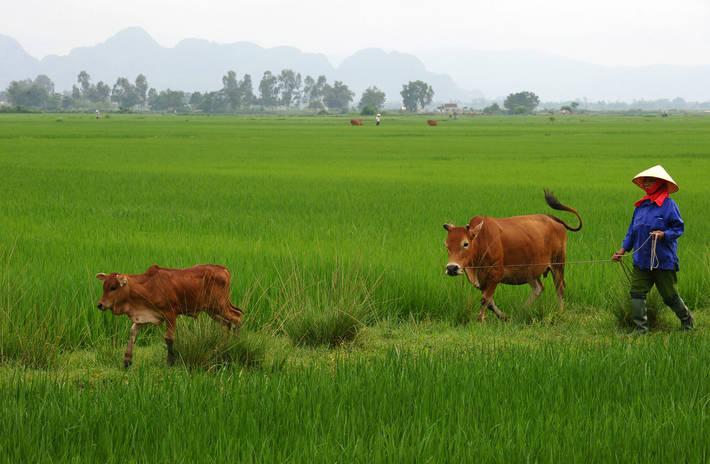 248964d3f2 FAO - News Article: L'indice FAO dei prezzi mostra segni di ...