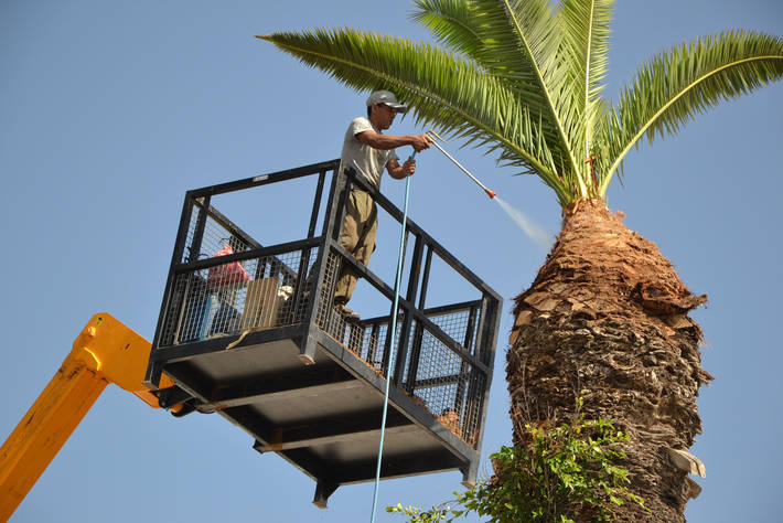 FAO - News Article: First global push to stop Red Palm