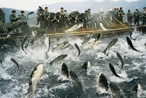 Photo: ©FAO Aquaculture Photo Library