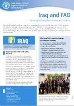 FAO in Iraq   Food and Agriculture Organization of the United Nations