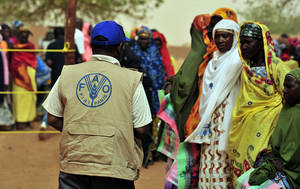 Photo: ©FAO/Issouf Sanogo / FAO
