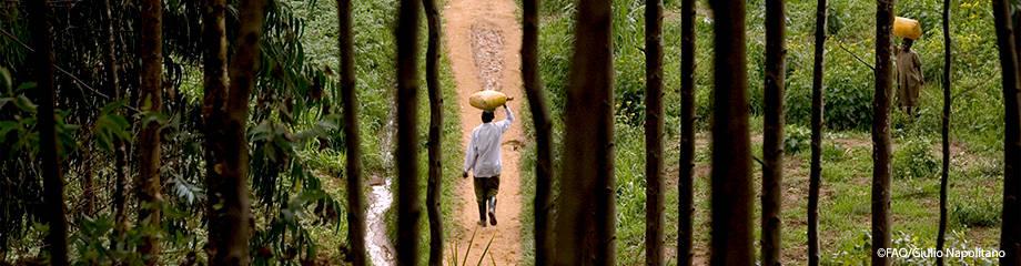CoFo to examine forest contribution to SDGs – NaijaAgroNet