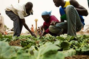 Colocar jovens para trabalhar no campo estimula a passagem de conhecimento tradicional e a segurança da biodiversidade. Foto: FAO