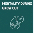 Mortality During Grow Out