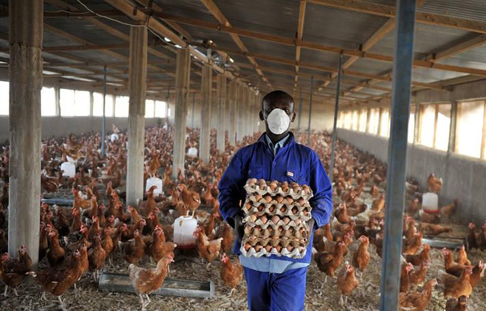 FAO - Noticias: El aumento de las enfermedades de origen animal requiere un nuevo enfoque