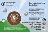 Wsd 2016 fao food and agriculture organization of the for 0 4 soil carbon