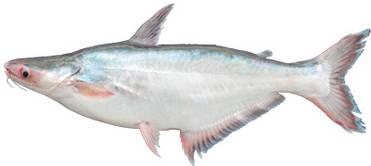 Catfish Dispute