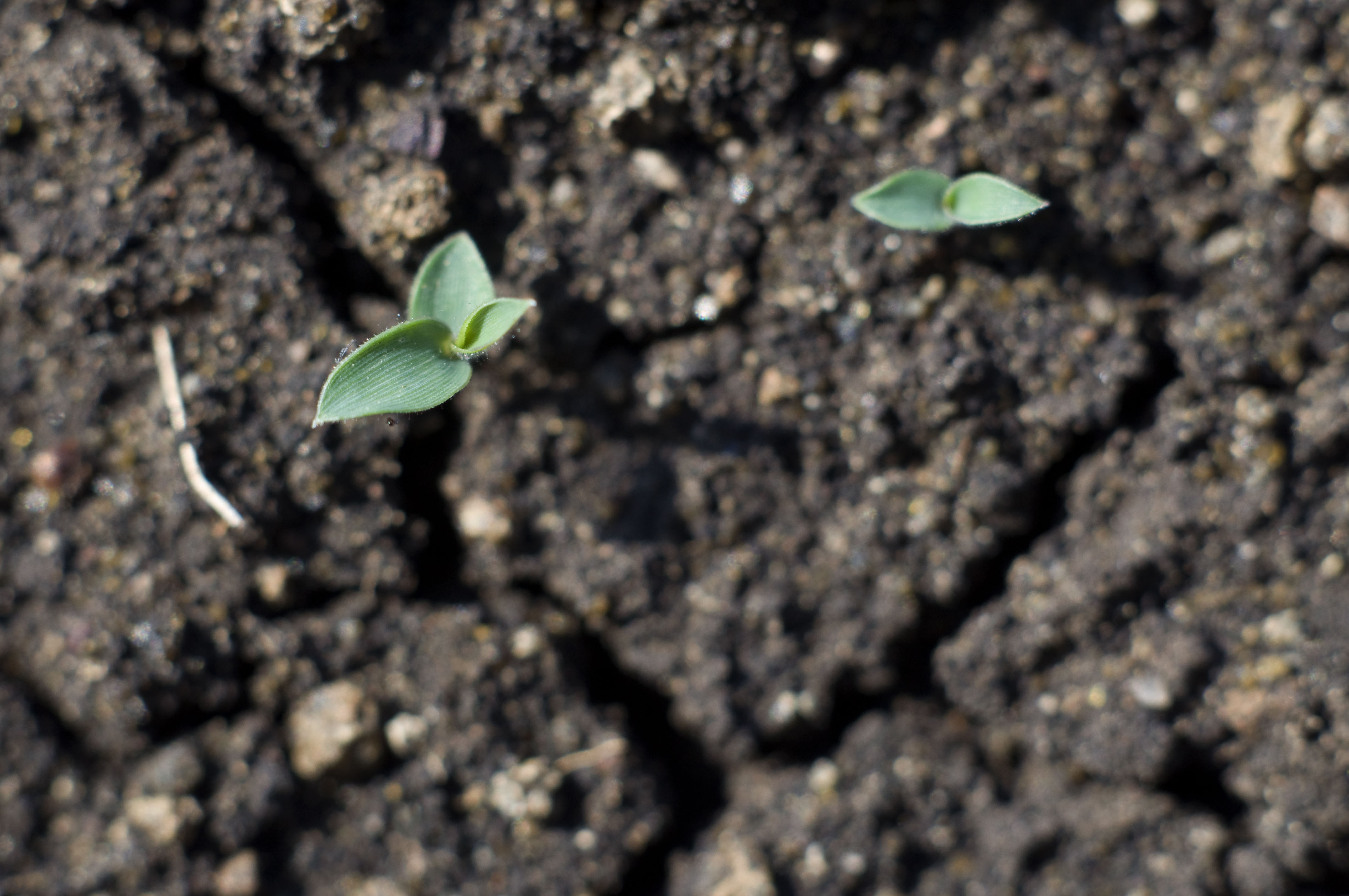 My childhood experience learning about life through the for Soil our life