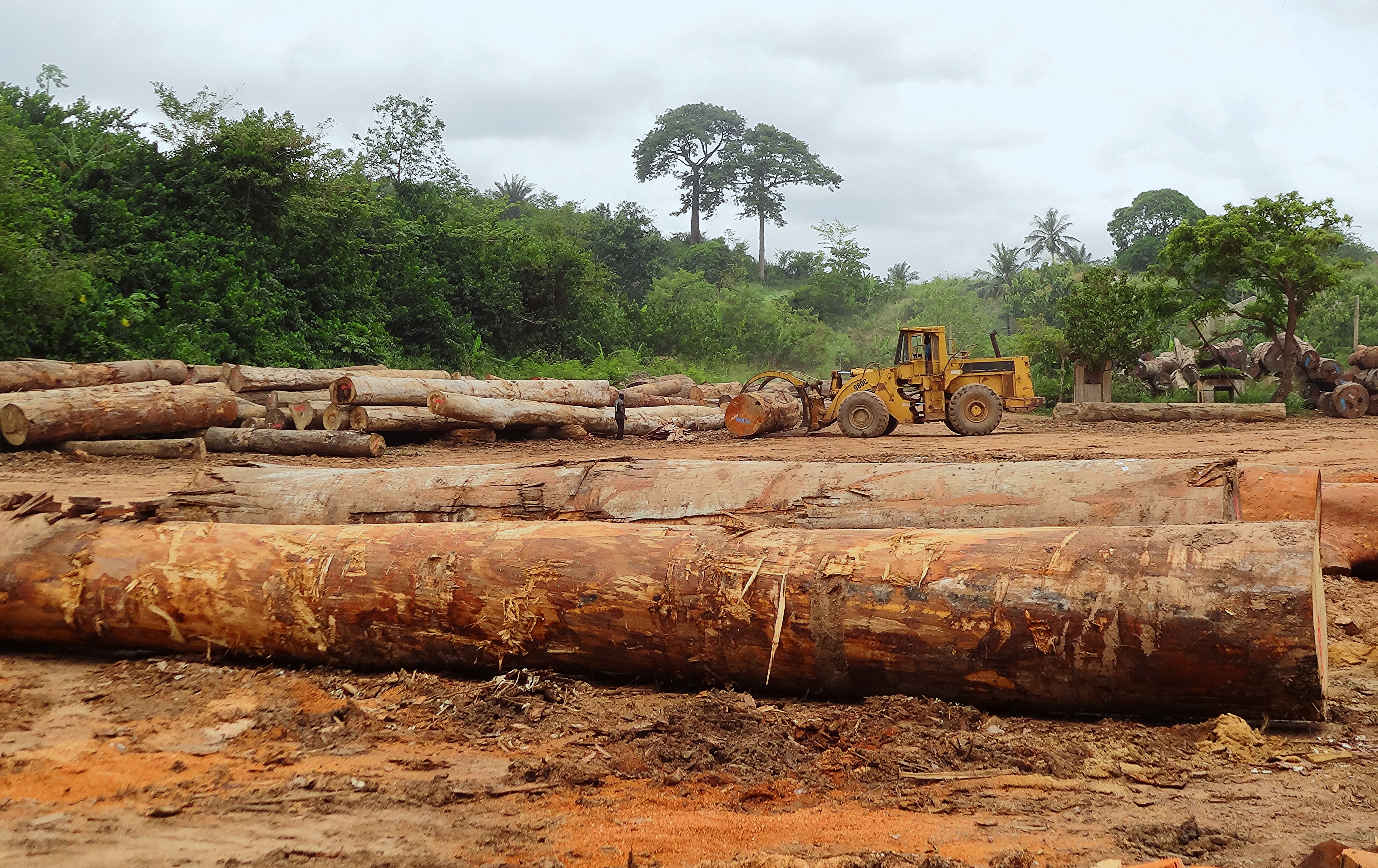 Championing rights and fair compensation for forest communities in Ghana