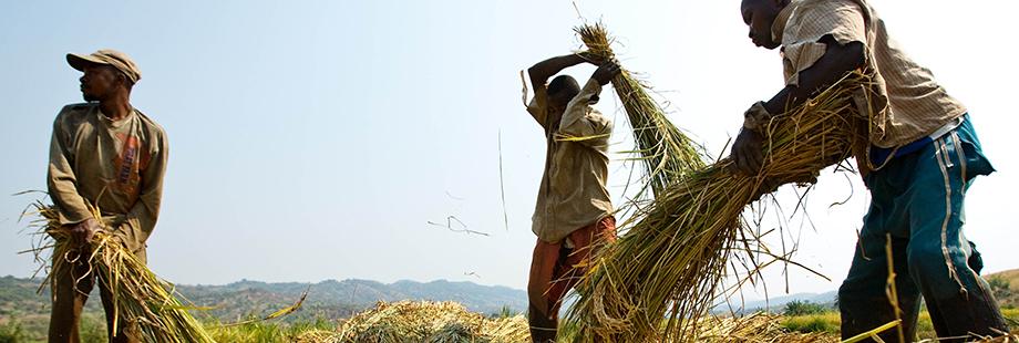 Agriculture intelligente face au climat