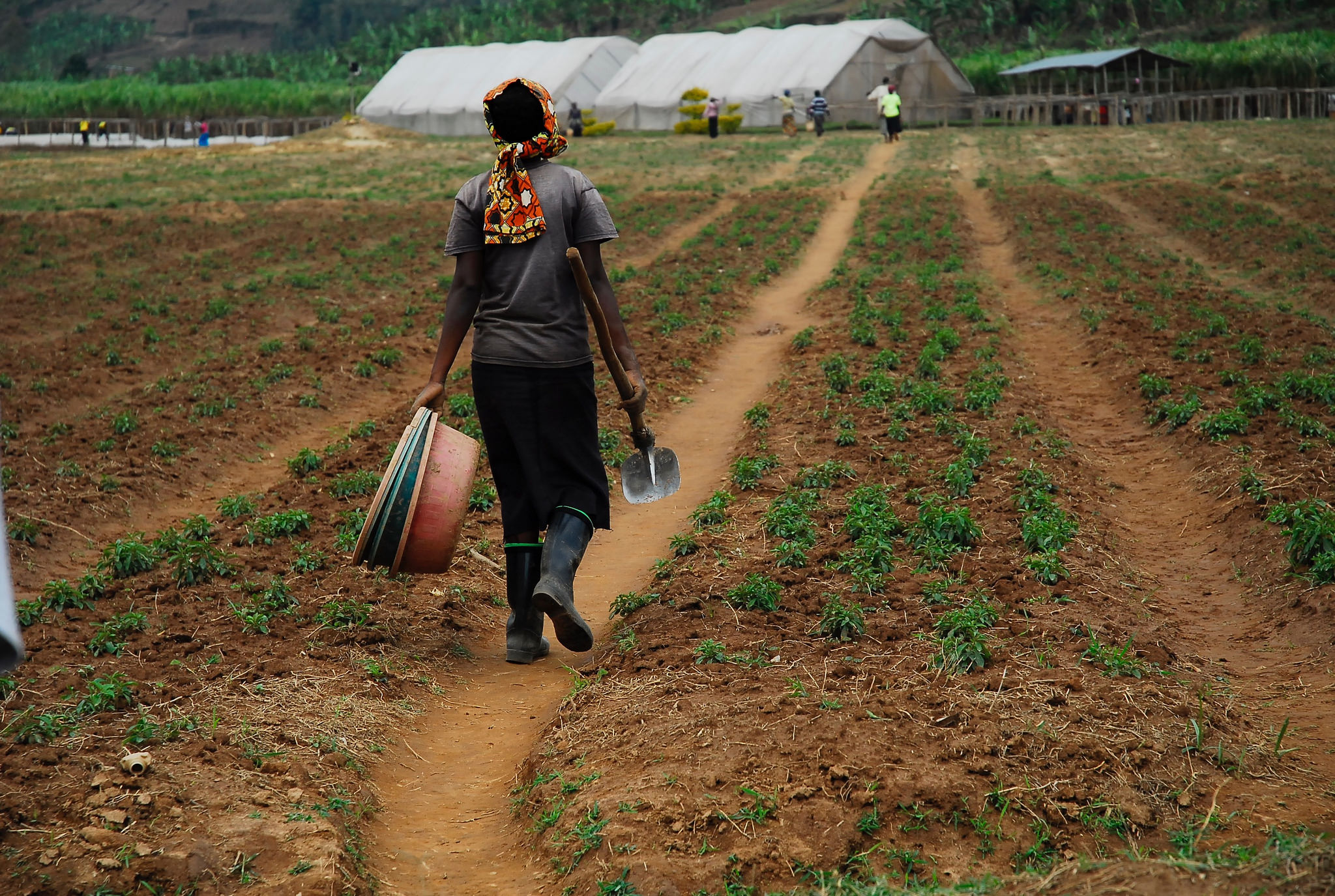 Sustaining the future of agriculture in the land of a thousand hills