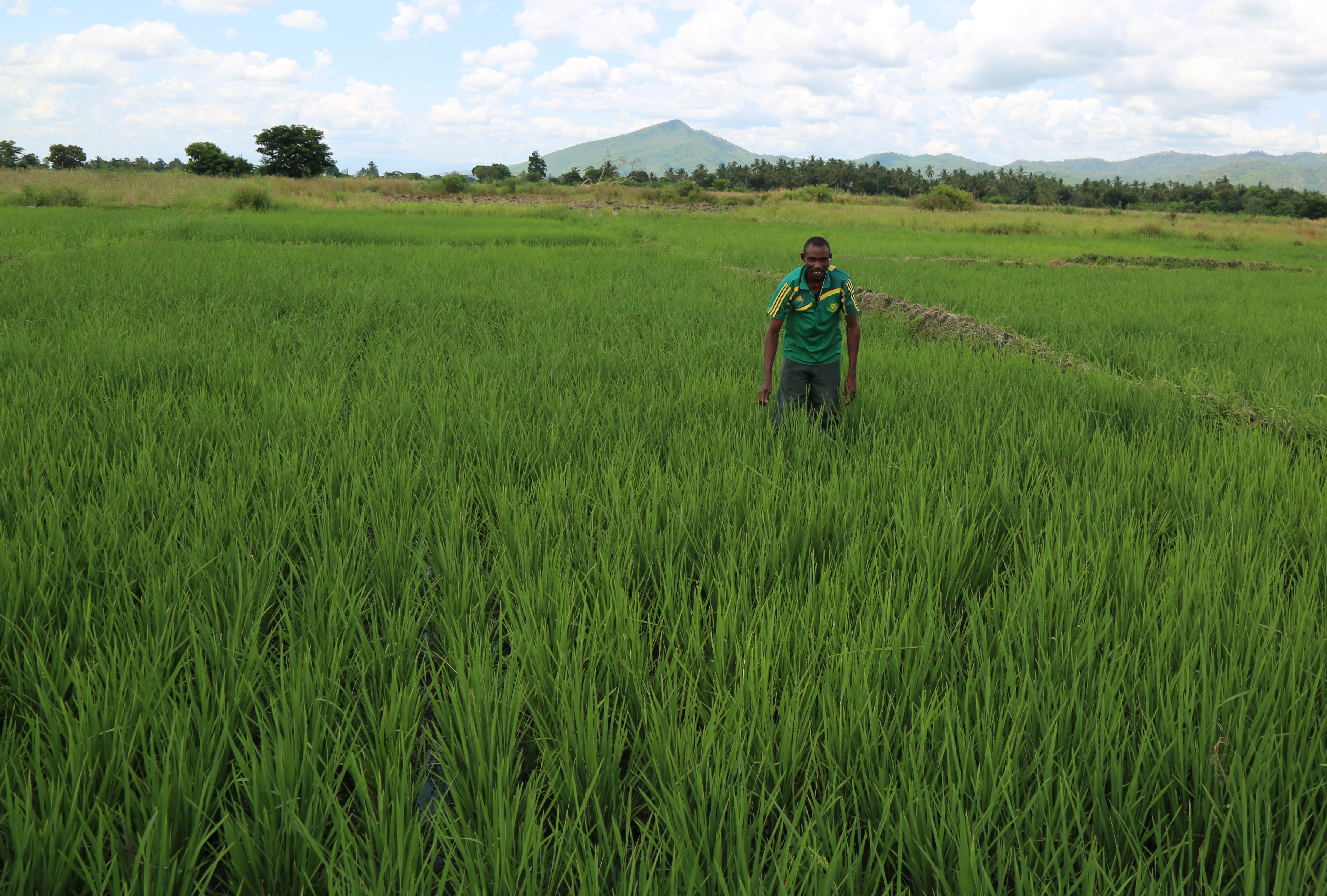 Morogoro's Best Farmer   FAO   Food and Agriculture