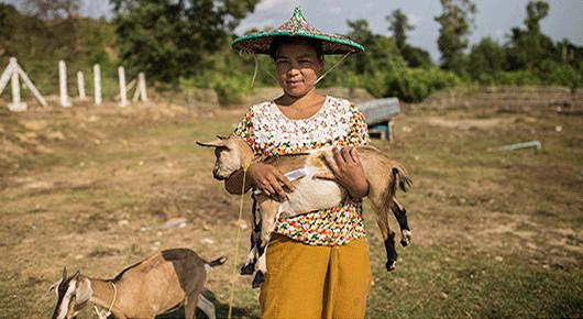 In Myanmar, FAO helps restore livelihoods in the aftermath of Cyclone Komen