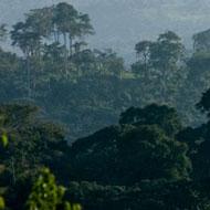 Gestion durable des forêts