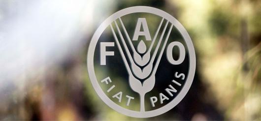 ФАО: Подпавшие под санкции РФ страны переориентируются на рынки Азии и Карибский регион