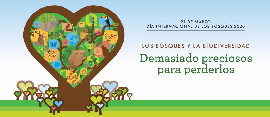 Dia Internacional De Los Bosques Organizacion De Las Naciones Unidas Para La Alimentacion Y La Agricultura