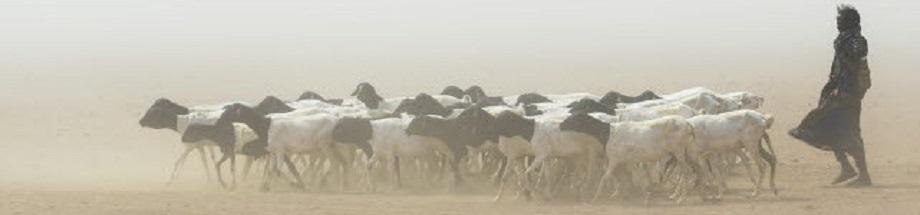 B2 - 1 Livestock production and climate change | الموقع الإلكتروني