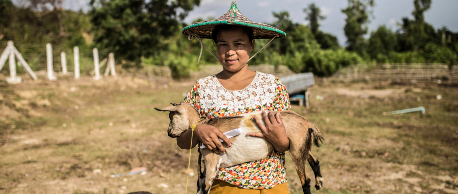 Maungdaw, Myanmar - A woman carries a baby goat