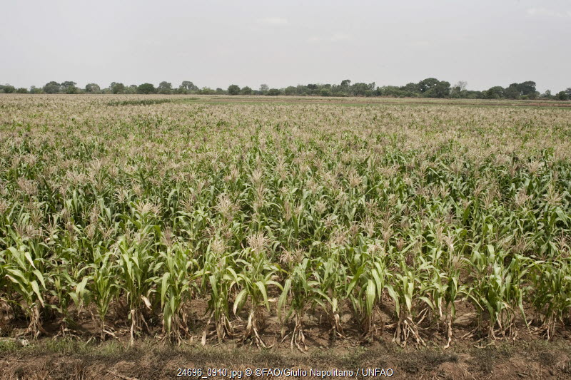 Climate Smart Agriculture Sourcebook | Food and Agriculture