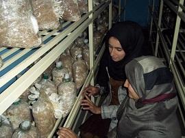 Mushroom growing business plan