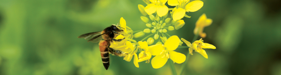 pollination project foundation