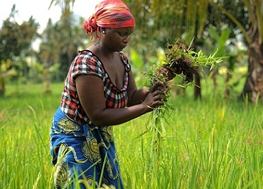 Climate-Smart Agriculture | Food and Agriculture