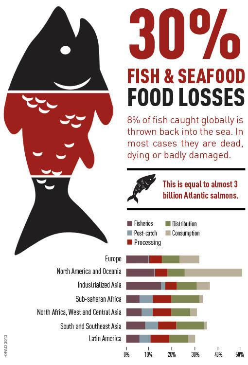 Fish Info Graphic