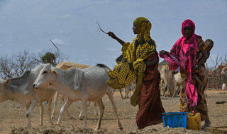 Reducing poverty among rural youth and women in Ethiopia