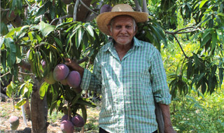 Climate-Smart Agroforestry Systems for the Dry Corridor of Central America