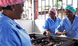 Transforming women's lives in Côte d'Ivoire through adapted fish smoking technology