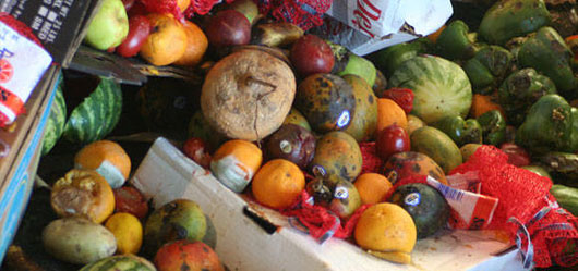 1.3 billion tonnes of food is lost or wasted every year around the globe