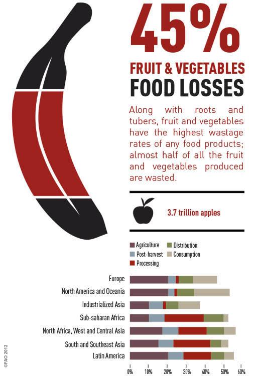 Fruit Info Graphics