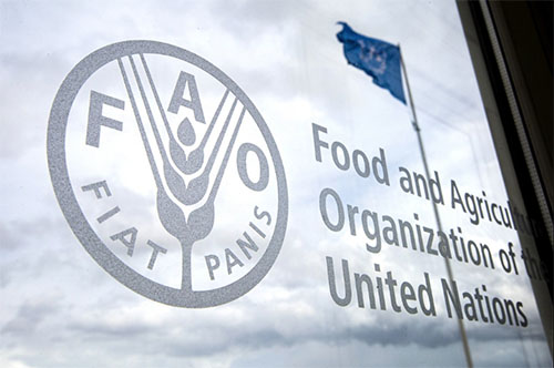 Terms and Conditions | FAO | Food and Agriculture Organization of the  United Nations