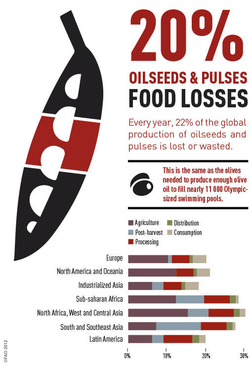 Oilseeds info graphic