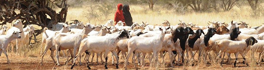 Food Chain Crisis Resilience Food And Agriculture Organization