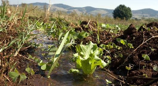 el manejo integral del suelo y agua que las considere como principales factores de produccin es clave para la produccin agrcola sostenible