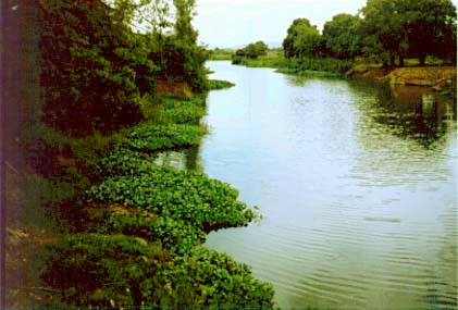 the effect of water hyacinth proliferation Water hyacinth control and possible uses  hydropower schemes are suffering from the effects of water hyacinth the owen falls  suffering from the proliferation .